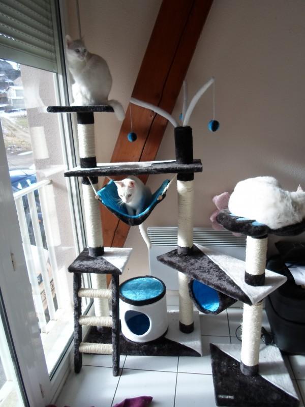 avis sur arbre a chat tivcrea gris bleu et blanc. Black Bedroom Furniture Sets. Home Design Ideas