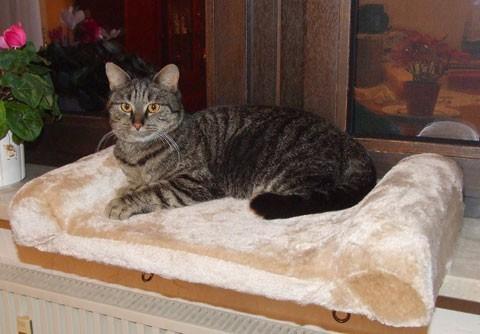banquette de fen tre pour chat couchage pour chat. Black Bedroom Furniture Sets. Home Design Ideas