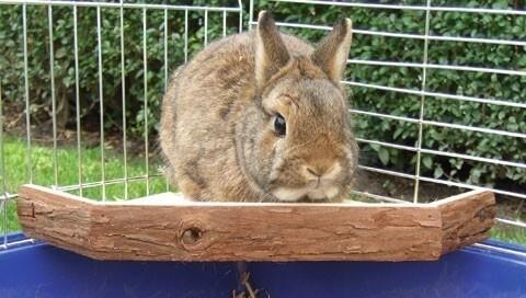 Terrasse pour lapin