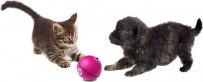 Magic Ball - Electronic dog and cat toy
