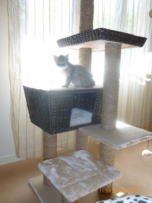 avis sur arbre chat curacao 141cm. Black Bedroom Furniture Sets. Home Design Ideas