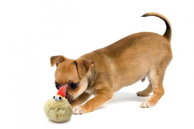 jouet lectrique pour chien et chat crazy bouncer jouet pour chien. Black Bedroom Furniture Sets. Home Design Ideas