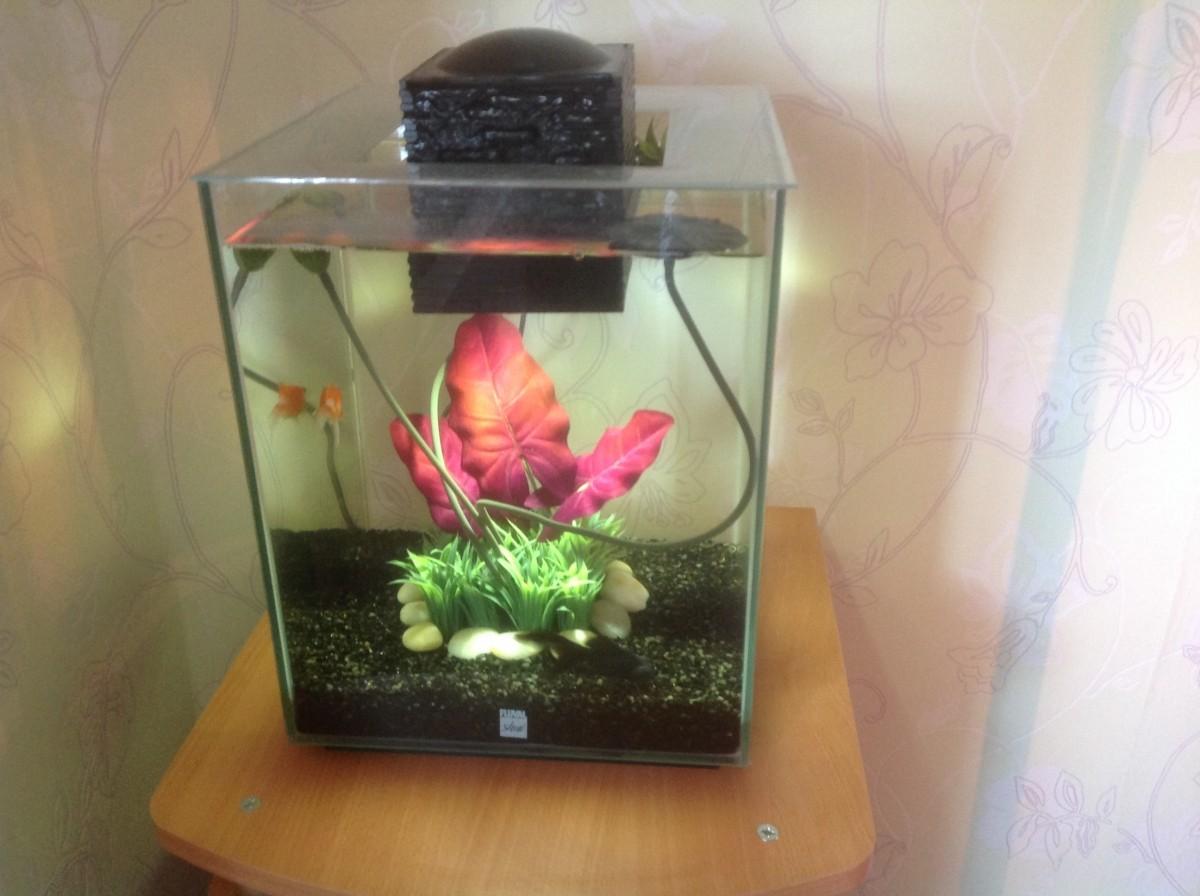 aquarium shui 2