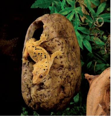 Cachette pour reptile Canopy Hidding Cave