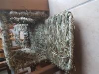 Maison-vegetale-d'herbe-XL-pour-rongeurs-_de_Lea_10075893685c7b79a3520525.67799740