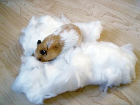 baumwolle f r hamster wei oder farbig. Black Bedroom Furniture Sets. Home Design Ideas
