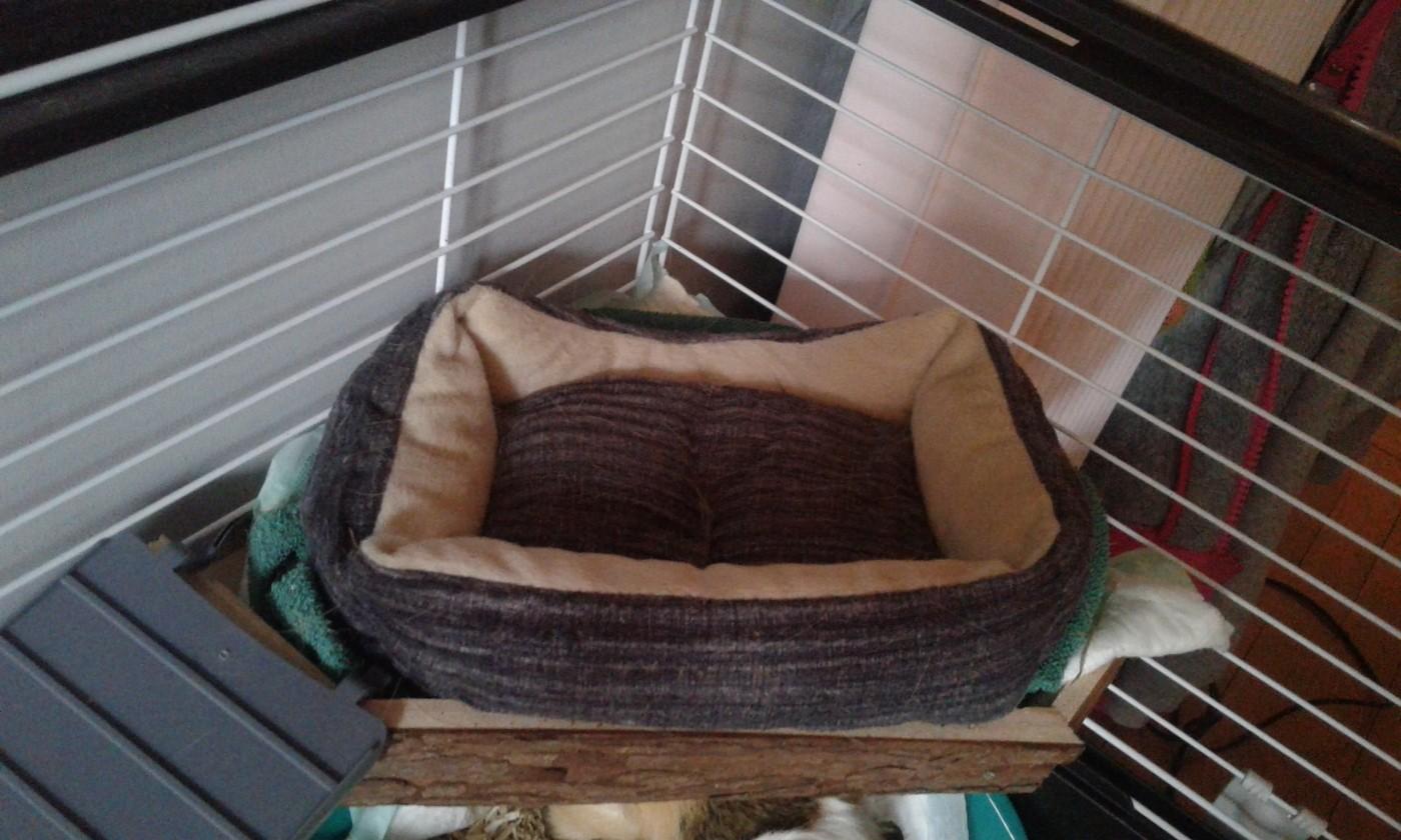 Alyce Perigosa opinião sobre abrigo e plataforma de madeira natural living