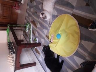 22377_Juguete-para-gatos-Predator-_de_Natalia_140963402959311f2481ab25.68241377