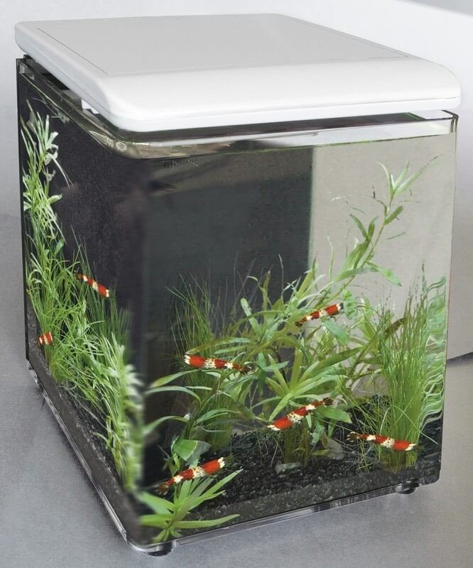 Home 8 et Betta Kit - mini aquarium acrylique_0