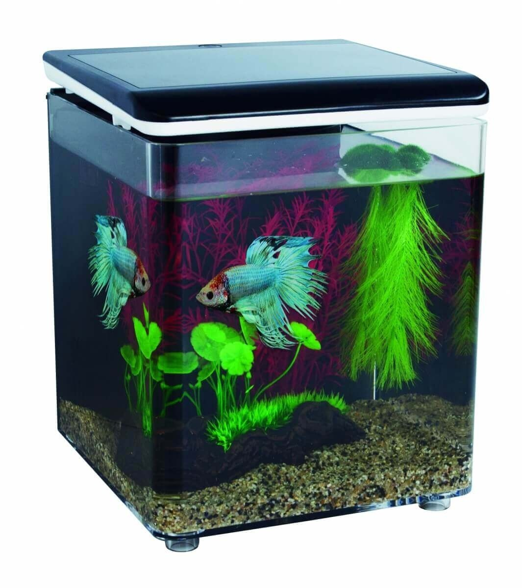 Home 8 et Betta Kit - mini aquarium acrylique_3