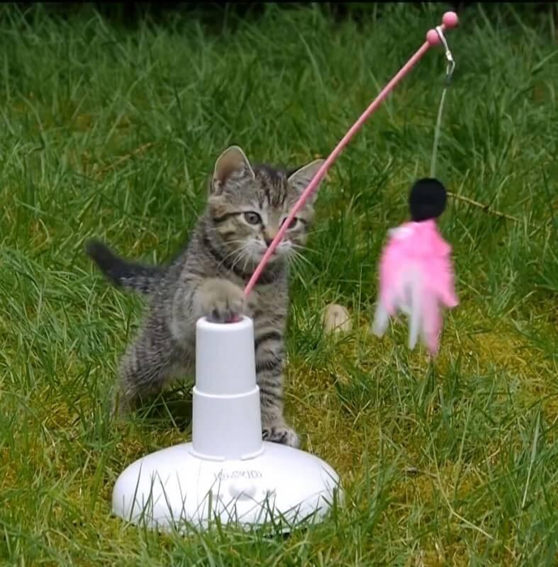 Elekktronisches spielzeug ° jagd für katzen