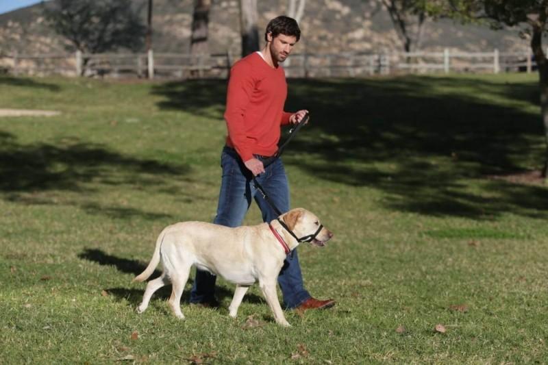 Collar de manejo para perros HALTI negro o rojo