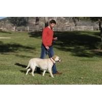 Licol pour chien HALTI - 2 couleurs au choix  (5)