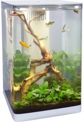Aquarium 25L 25x25x40 cm avec éclairage sensitif led blanc/bleu et bac à décantation