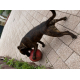 Boomer-Ball-pour-chien-4-tailles_de_Anthony_184212404760f1b035a8c2a4.20780760