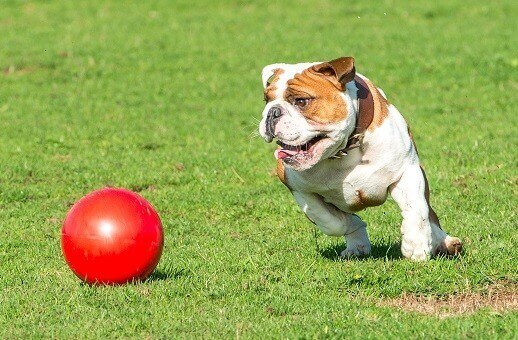 Boomer Ball pour chien 4 tailles