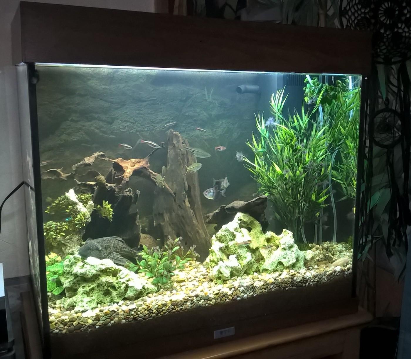 Quartz fonc pour aquarium sable et gravier aquarium - Gravier pour aquarium ...