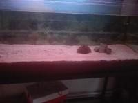 23381_Billes-Quartz-blanc-plage-pour-aquarium-10kg_de_Angelique_7391053465ac7369fd25d16.21141989