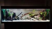 23381_Billes-Quartz-blanc-plage-pour-aquarium-10kg_de_JULIEN_1767110165ca707172252b6.65703997