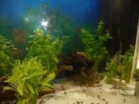 23381_Billes-Quartz-blanc-plage-pour-aquarium-10kg_de_chantal_5136070715b449a41bd2ac0.15939379