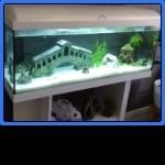 23381_Billes-Quartz-blanc-plage-pour-aquarium-10kg_de_marilyn_190263470559206e2be349f4.15954032