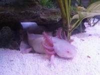 Billes-Quartz-blanc-plage-pour-aquarium-10kg_de_Andy_1071419679575daca4bf6753.62330953