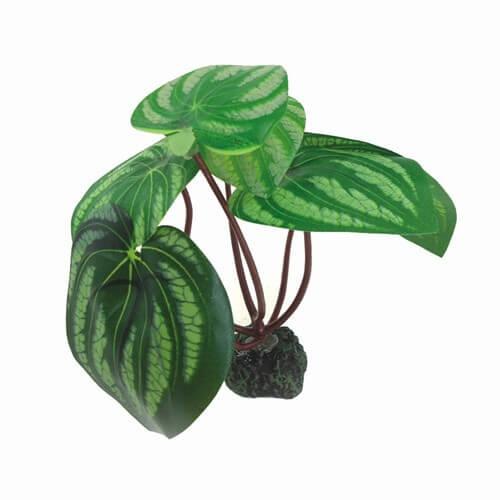 Plante tropicale grandes feuilles 17cm d coration for Plante 8 feuilles