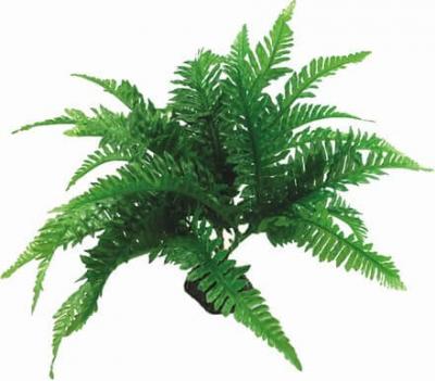 Plante tropicale 2