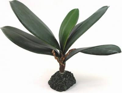 Pianta in stile Ficus 21cm