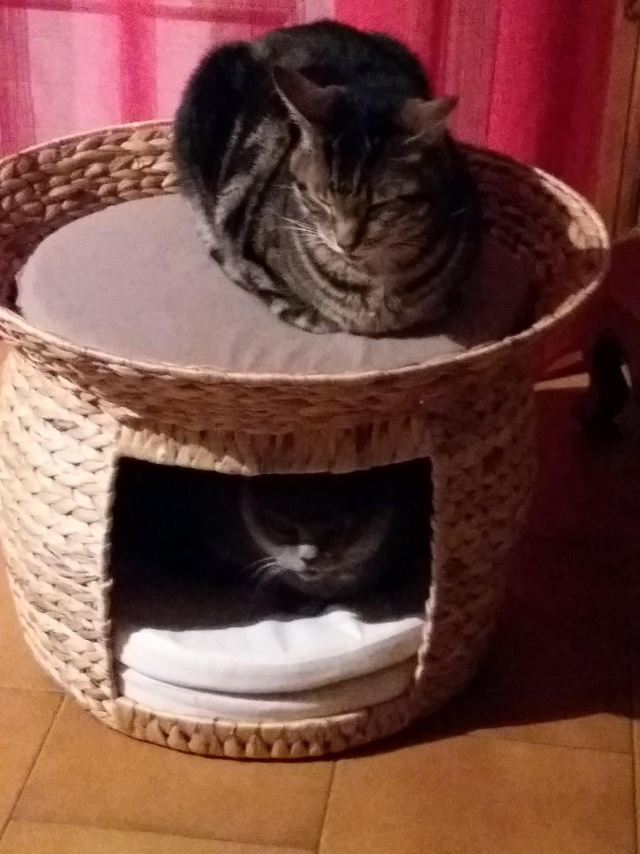 panier pour chat jacinthe d 39 eau avec coussin beige couchage pour chat. Black Bedroom Furniture Sets. Home Design Ideas