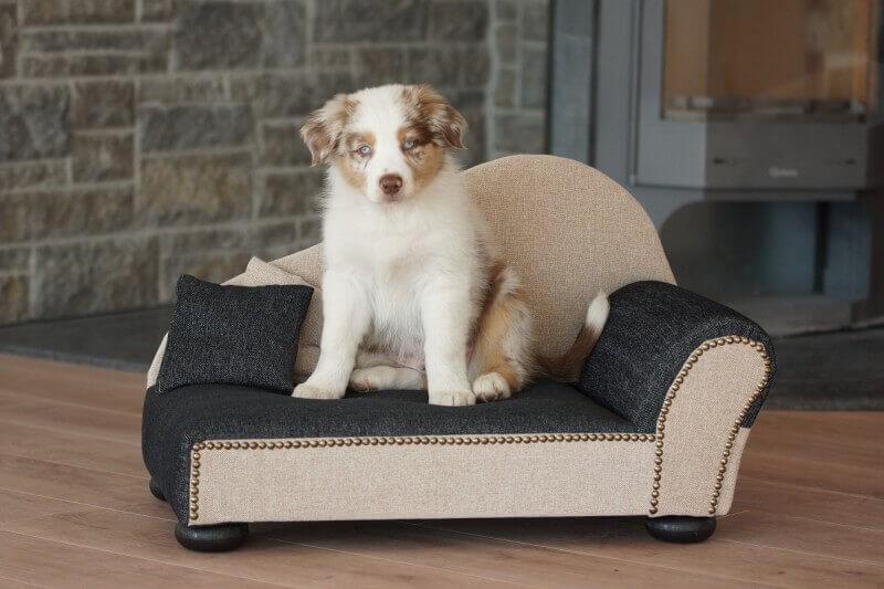 Canap pour chien leroy pouf beige noir panier et for Canape pour chien