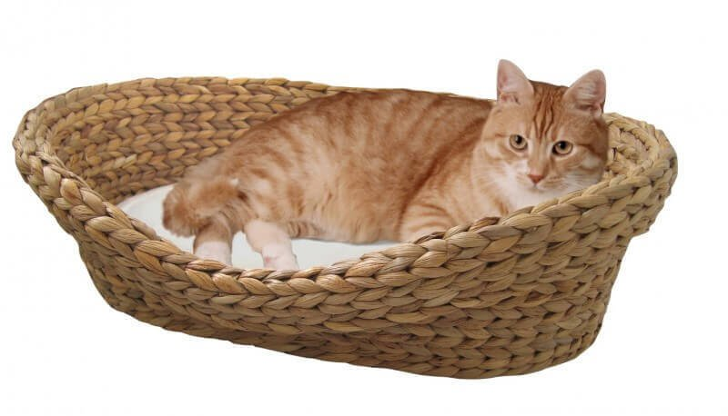 image de chat dans un panier image de. Black Bedroom Furniture Sets. Home Design Ideas