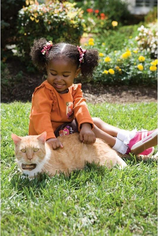 Clôture anti-fugue pour chat PetSafe