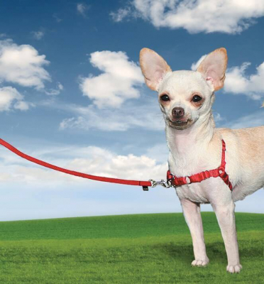Harnais EasyWalk chien