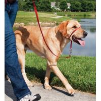 Licol EasyWalk chien Rouge
