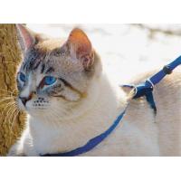 Harnais pour chat EasyWalk bleu avec laisse