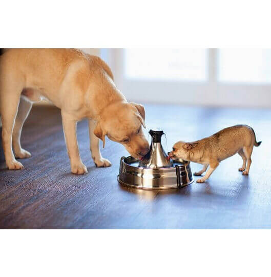 Fontaine Drinkwell Inox 360° pour chien et chat_4
