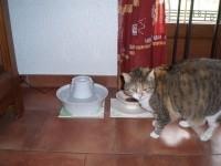 Fontaine-Drinkwell-ceramique-Avalon_de_Sylvie_922317357552fab232dd3e7.37770986