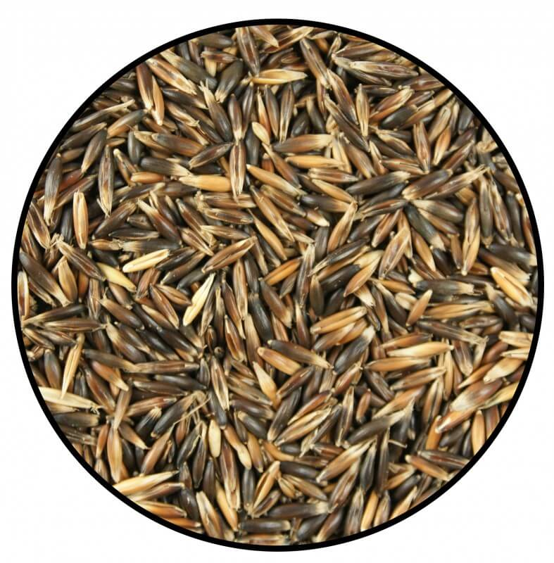 Oats for Small Pets_0