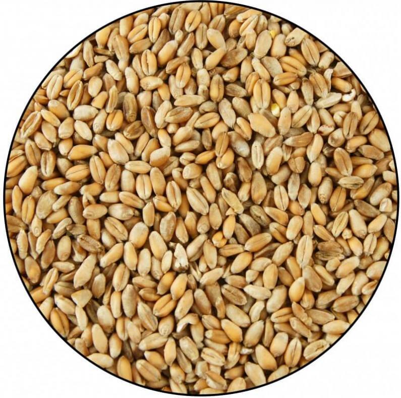 Wheat 5kg