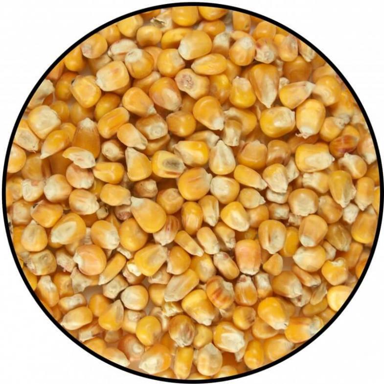 Maïs rond