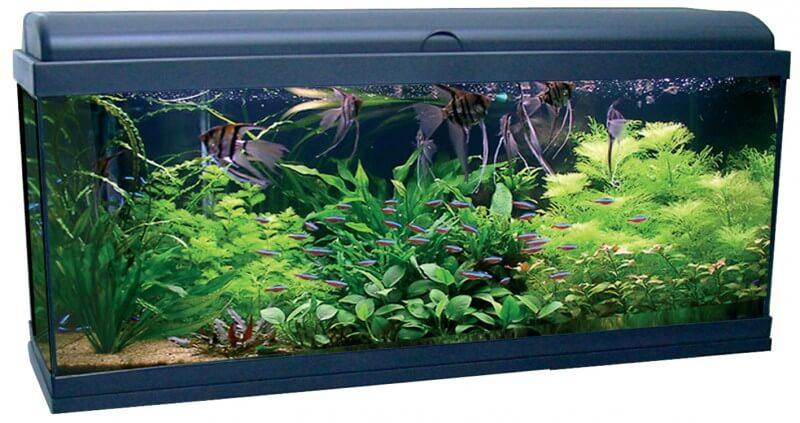 Aquadream 100 noir 115 litres avec clairage led for Decoration pour aquarium poisson rouge