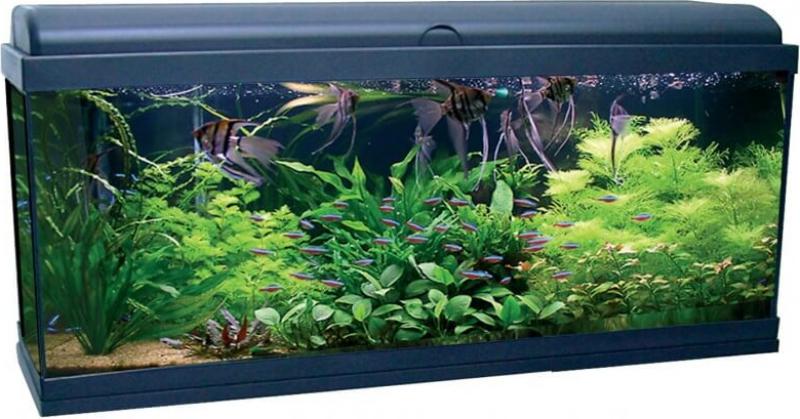 Aquadream 100 Negro 115 litros con iluminación LED