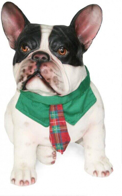 Cravate écossaise taille S pour chien