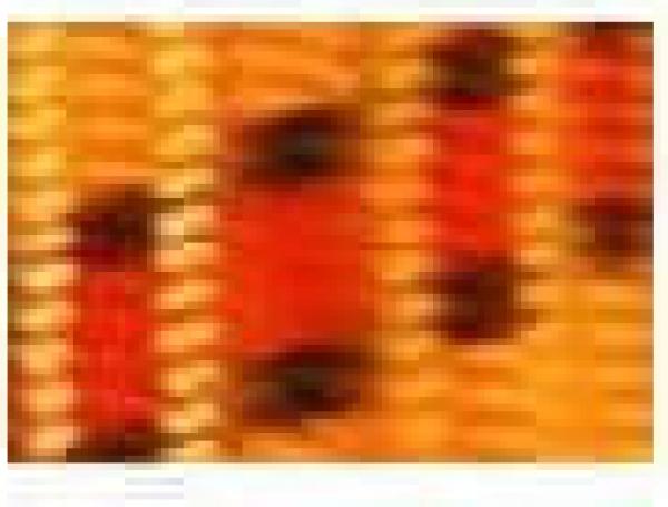 Laisse corde en nylon Orange