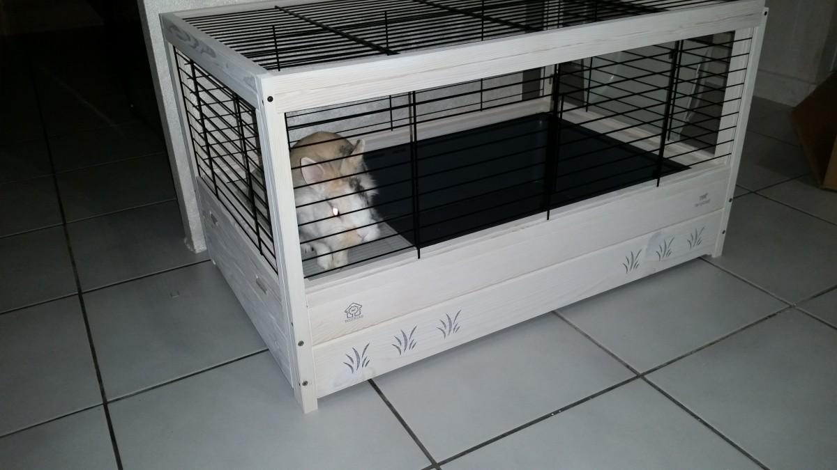 cage en bois arena 80 pour lapin et cochon d 39 inde. Black Bedroom Furniture Sets. Home Design Ideas