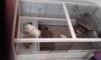 Cage-bois-ARENA-120-cm_de_Karine_13374401685780e87312c7a9.86462280