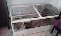 Cage-bois-ARENA-120-cm_de_Karine_5157747075780e8465f89f8.76367823