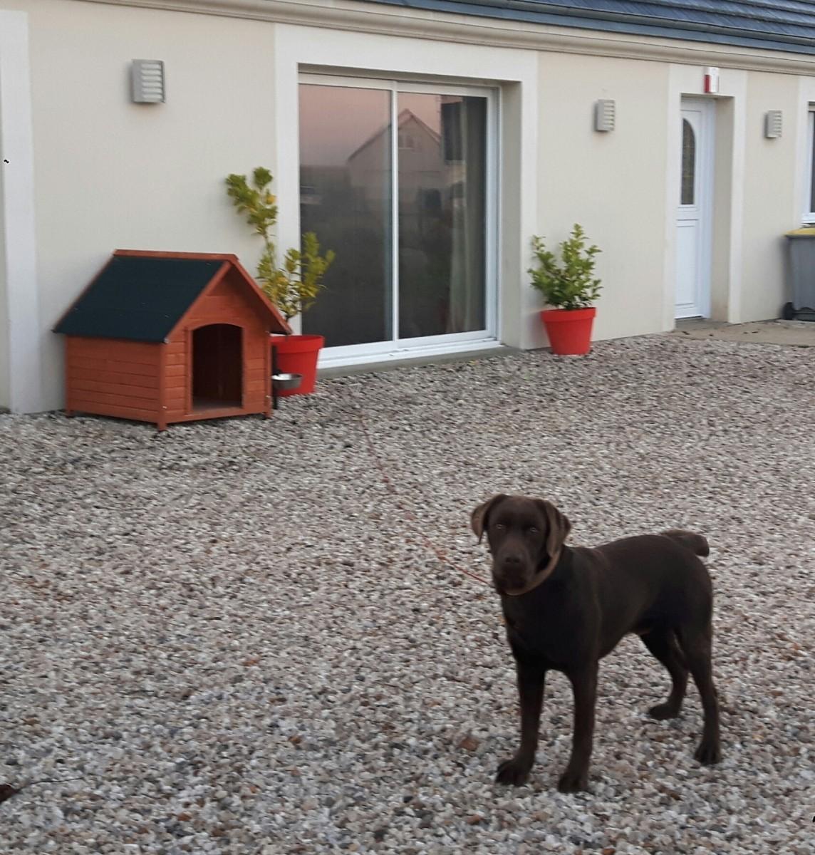 avis sur niche pour chien en bois toit pentu akira. Black Bedroom Furniture Sets. Home Design Ideas