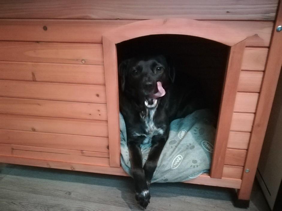 avis sur niche chien en bois api toit plat et rabattable. Black Bedroom Furniture Sets. Home Design Ideas